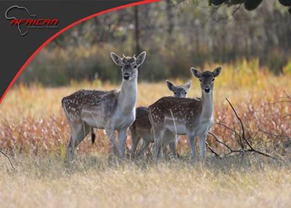 Hartwater Fallow Deer